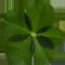 春の花素材 植物素材 フラワーパーツ クローバー ダウンロードボタン
