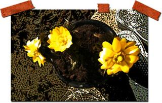 フリー素材 フラワーパーツ 春 花素材 福寿草 写真素材 雑談