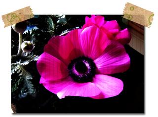 フリー素材 フラワーパーツ 春 花素材 福寿草 写真素材