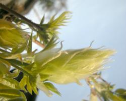 散歩植物図鑑 4月 花 フリー写真素材