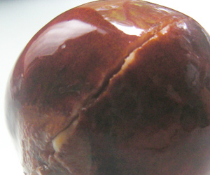 アボカド アボカド栽培 種 チャイグラス