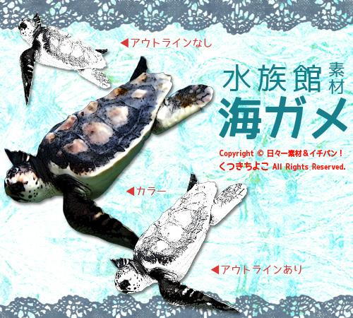 フリー素材 イラスト 水族館素材 ウミガメ サンプル画像