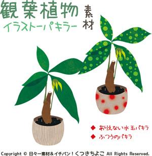 フリー素材 イラスト 観葉植物 パキラ サンプル画像