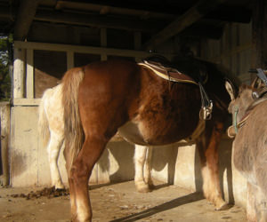 フリー素材 写真素材 午 馬 牧場