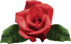 バラ 赤2