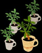観葉植物イラスト素材《カポック4種》配布と家計簿プロジェクトリーダーご紹介