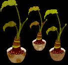 観葉植物イラスト素材《クワズイモ三種》配布と精霊馬の真実-お詫びと訂正-