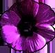 フリー素材 花 フラワーパーツ アネモネ 春 ダウンロードボタン