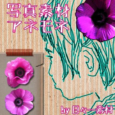 花 フラワーパーツ アネモネ 春 サンプル