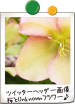 神代植物公園の桜とその他未確認の花 ツイッター ヘッダー画像 アイコン サンプル画像