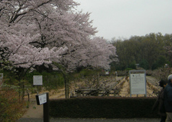 神代植物公園の温室で南国気分♪