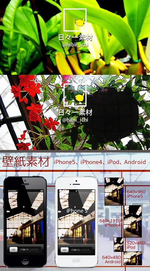 フリー写真素材 Twitter ヘッダー画像 アイコン 熱帯植物 赤い花と謎グリーン サンプル画像