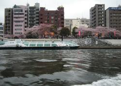 水上バス 隅田川 浅草 桜 写真素材