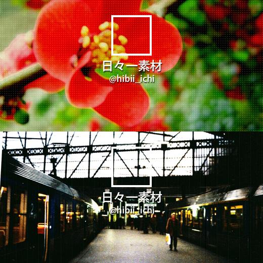 フリー写真素材 Twitter ヘッダー画像 アイコン 赤い花 サン・ラザール駅 サンプル画像