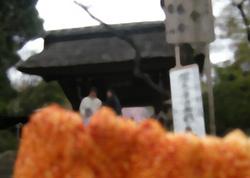 深大寺 お花見