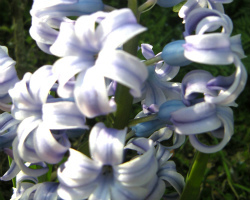 週末散歩 植物 花 季節