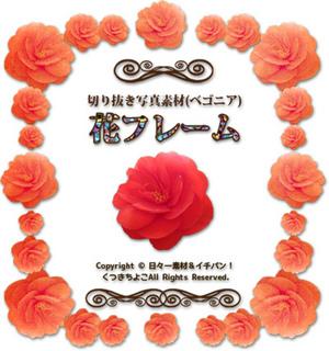 フレーム素材 花 ベゴニア 赤 2 サンプル画像