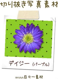 切り抜き写真素材 花 デイジー 紫