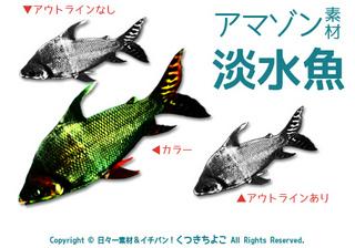 フリー素材 イラスト 淡水魚 アマゾンの魚 しましまの魚 サンプル画像