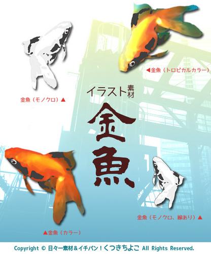 イラスト素材 フリー素材 金魚 納涼 サンプル画像