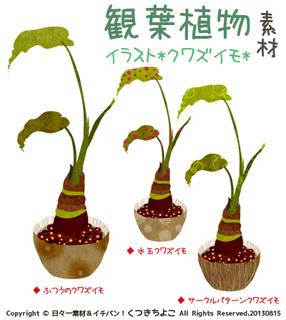 フリー素材 イラスト 観葉植物 クワズイモ グリーン サンプル画像