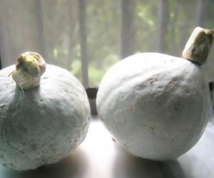 フリー素材 写真 かぼちゃ 雪化粧 かぼちゃの煮物