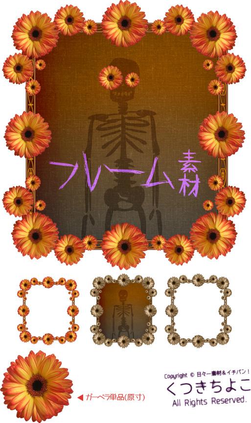 フリー素材 フレーム素材 花 切り抜き写真 ガーベラ サンプル画像