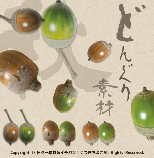 フリー素材 切抜き画像 秋モチーフ どんぐり イチイガシ サンプル画像