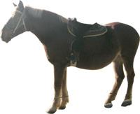 フリー素材 馬 写真 ツギハギ